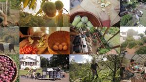 INHABIT : A PERMACULTURE PERSPECTIVE